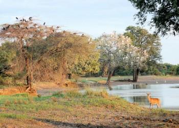 Südluangwa-Nationalpark